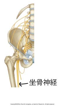 ギックリ腰の痛みの原因